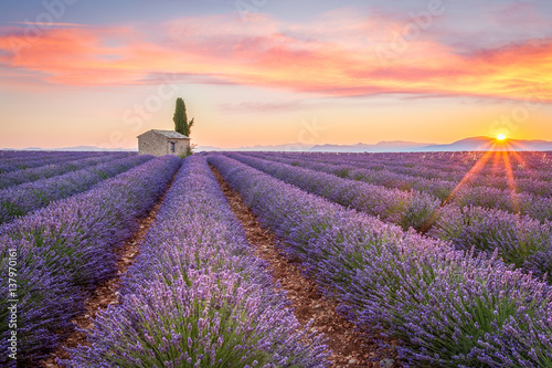 Sunrise in Valensole Canvas Print