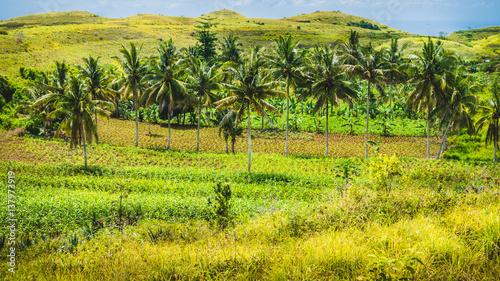 Palm Oasis In Wisata Bukit Teletubbies Hill Nusa Penida