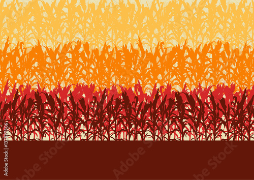 Corn field evening or morning light landscape vector