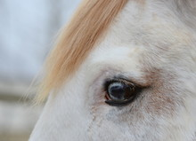 Augenblick, Ungewöhnlich Pigmentiertes Auge Eines Schimmels, Detail