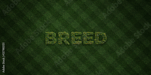 Fotografering  BREED - fresh Grass letters with flowers and dandelions - 3D rendered royalty free stock image