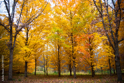 Fototapety, obrazy: Beautiful autumn forest