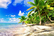 Tropical scenery. Beautiful palm beach with turquoise waters and white sand. Tropical vacations. Relaxing tropical holidays. Idyllic tropical scene. Saona Island, Dominican Republic