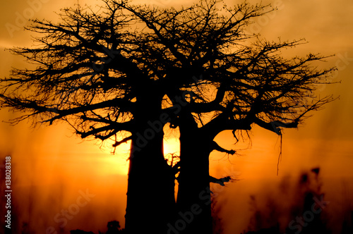 Tuinposter Baobab baobab tree sunset