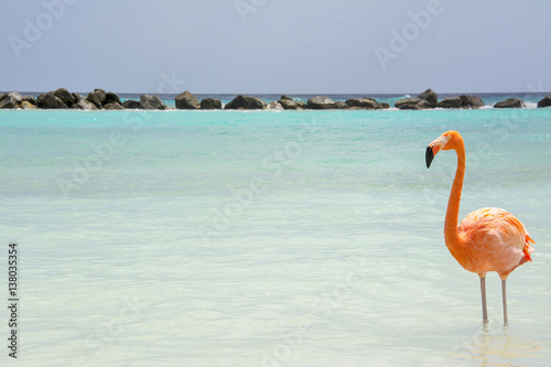 Fotobehang Flamingo Flamingo Beach Aruba