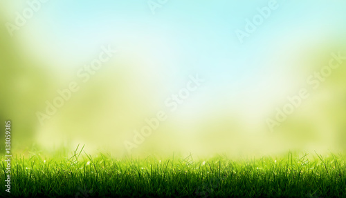 Fotobehang Gras Blades of Green Grass with a blurred sky blue and green garden foliage background.