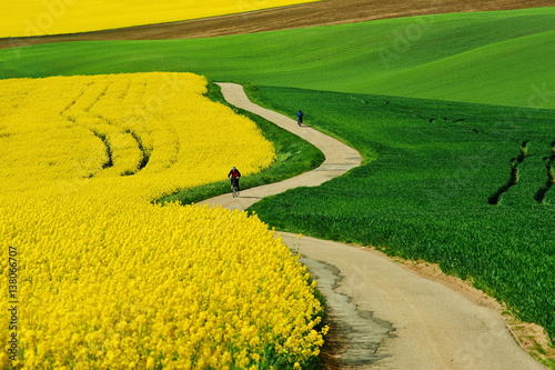 Fotobehang Meloen Bicycles in south moravia, road with fields and rape
