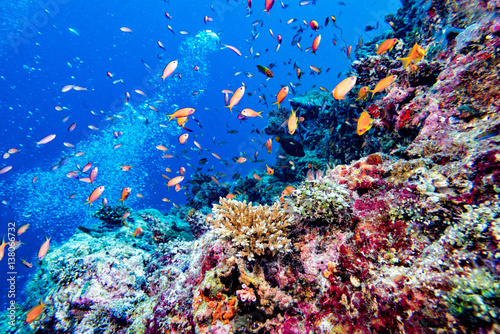 Foto op Canvas Onder water Maldives hard coral house for Fishes