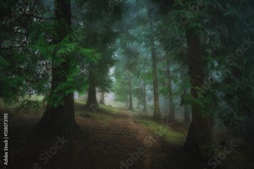 Foto op Canvas Weg in bos path in the foggy dark forest