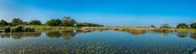 Wetland Near City