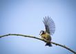 Leinwandbild Motiv winkender Vogel