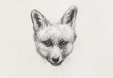 Fox Portrait, Pencil Drawing On Paper. Copy Space.