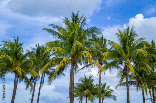 Palm Trees Stand Majestic Along Miami Beach On A Sunny Summer Day