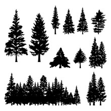Pine Fir Forest Conifer Coniferous Tree Silhouette