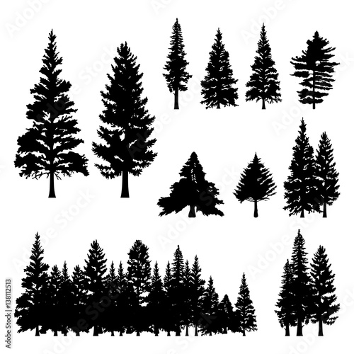 Billede på lærred Pine Fir Forest Conifer Coniferous Tree Silhouette