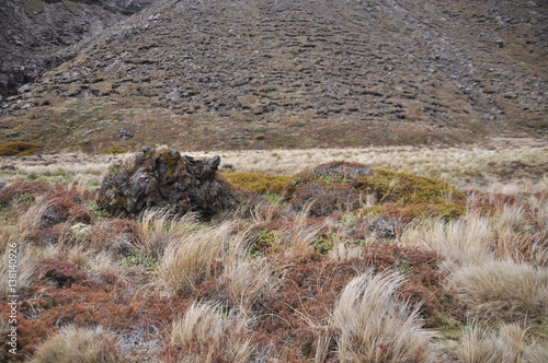 Fotografie, Obraz  Mordor below Mount Doom (Mount Ngaunuhoe) Walkway at Tongariro Alpine Crossing,