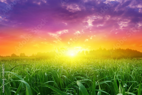 Field of green grass and colorful sunset.