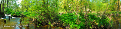 Poster Rivière de la forêt Panoramic image of the river in the summer