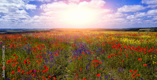 Photo sur Aluminium Poppy colorful flowers in the field in sunny day. wonderful summer landscape. nature background