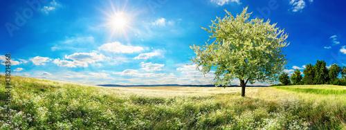 Szeroka łąka na wiosnę, z kwitnącym drzewem, błękitem nieba i słońcem
