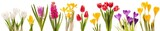 Fototapeta Tulipany - Spring flowers collection