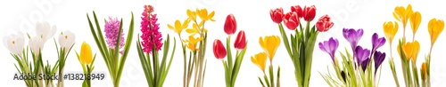 Fotobehang Tulp Spring flowers collection