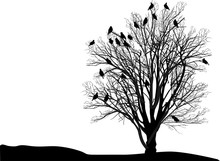 Group Of Birds On Black Isolated Bare Tree