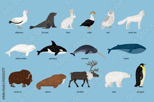 Fotografie, Tablou  Collection of Arctic Animals