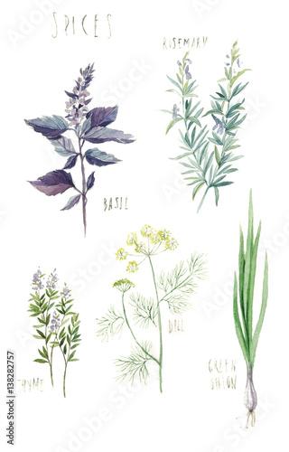 przyprawy-rozmaryn-bazylia-tymianek-koper-zielona-cebula