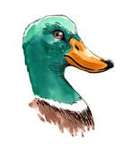 Duck head - 138298704