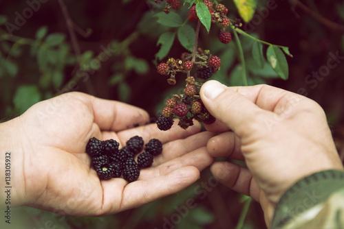 Fotografia, Obraz  Blackberry