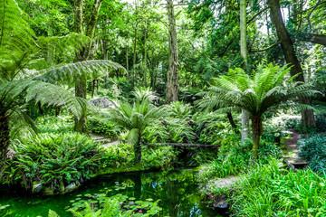 Obraz na Plexi tropischer Wald Portugal