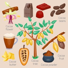 Set Of Cocoa. Chocolate Tree. Vector Illustration. Cartoon Style.