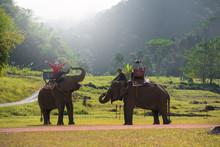 Two Young Women Riding An Elephant In The Asia Natural Scenery.
