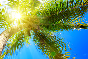 Fototapeta Eko Palm tree and sun.