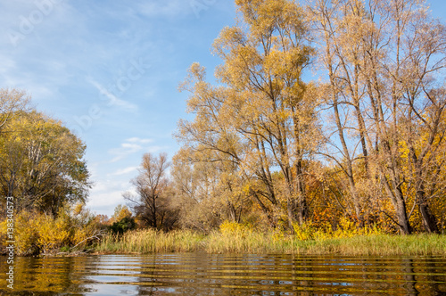 Foto op Canvas Herfst Fall River, Autumn trees in gold