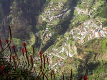 Flowerage Of Madeira, Flowers ...