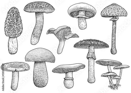 Foto Group of mushroom illustration, drawing, engraving, vector, line