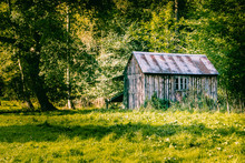 Old Wooden Shed In Woodland