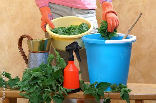 Fototapeta Preparing an nettle extract for plants in the garden obraz
