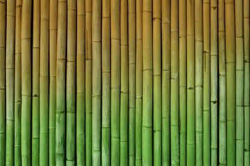 Fototapeta Bambus bamboo fence background halftone green and yellow