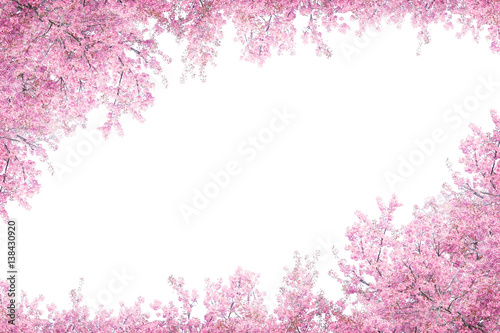 Photo  Cherry blossom frame use as background