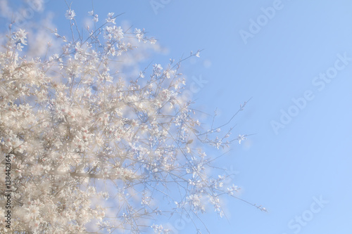 Photo  double exposure, abstract image of cherry tree