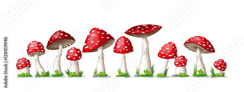 Slika na platnu Illustration of some fly mushrooms in front of white background, panoama