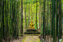 Buddha Statue In Middle Of Bamboo Forest.