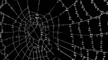Spider Web Close-up.The Shot O...