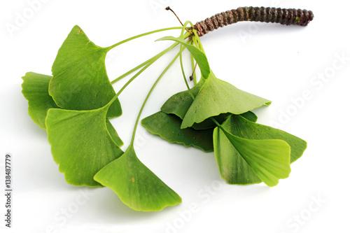Fotografia feuilles di ginkgo