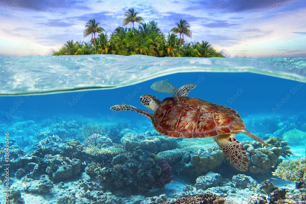 Green turtle underwater at the tropical island - obrazy, fototapety, plakaty