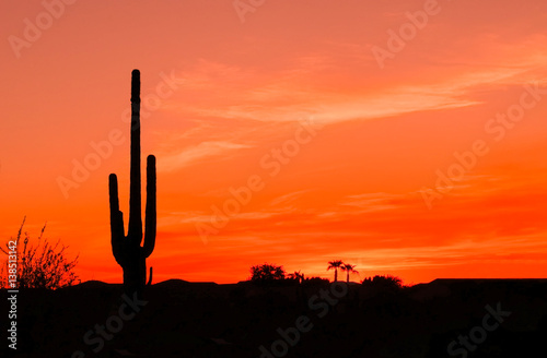 Foto op Canvas Cactus Bright Orange Desert Sunset with Saguaro Cactus in Silhouette