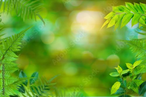 Green trees and leaf greenery bokeh